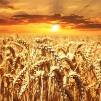 Nutri Grain Protect